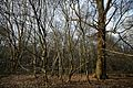Beech, birch and oak at High Beach, Epping Forest, Essex England.jpg