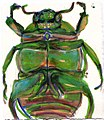 Beetle-ink-drawing.jpg