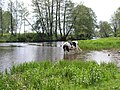 Belarus-Usa River-8.jpg