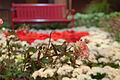 Bellagio Conservatory (5792063625).jpg