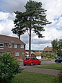 Belmore Park, Ashford - geograph.org.uk - 1441922.jpg