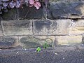 Bench mark on the garden wall of 4 Filey Road, Scarborough - geograph.org.uk - 1527786.jpg