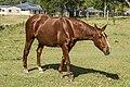 Benjamin's friend waiting for carrot-2 (17934596883).jpg