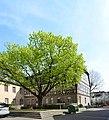 Bensheim, Wambolter Hof, Rückseite (2).jpg