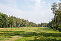 Bergen-Belsen concentration camp memorial - the former camp's main street - 01.jpg