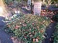 Berlin, Westend, Friedhof Heerstrasse, Grab Hans-Christoph Knebusch.jpg