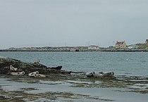 Berneray Seals.jpg