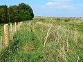Beside the Ridgeway Monkton Down - geograph.org.uk - 970768.jpg