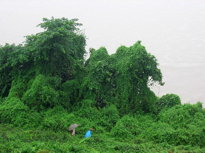 File:Bhamo-ayeyarwady-d01.jpg