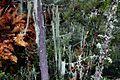 Bhutan-Paro-118-Aufstieg zum Taktshang-Tigernest-Farn-Flechten-gje.jpg