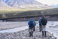 Biologists set off into the wilderness to study birds in Denali (3d035688-60fb-4a5c-8c48-844360e8d777).jpg