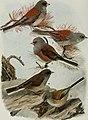 Bird-lore (1915) (14568665448).jpg