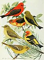 Bird-lore (1918) (14748015494).jpg