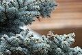 Bird (107267453).jpeg