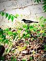 Bird 24.jpg