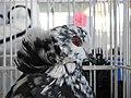 Birds exhibition - Cluj-Napoca - pigeons (3188894652).jpg