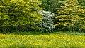 Bloemenweide aan rand van boomwal. Locatie, Natuurterrein De Famberhorst 07.jpg