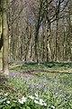 Bois d'Hubermont, Bois d'Antoing, Bois de Leuze 11.jpg