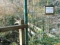 Bonnington Iron Bridge, Falls of Clyde - geograph.org.uk - 862375.jpg