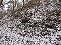 Boreč (České středohoří), les na úpatí III.jpg