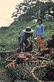 Borneo1981-062.jpg