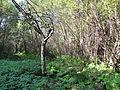 Bozicka reka43.JPG
