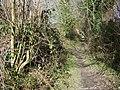 Bridleway to Athelhampton - geograph.org.uk - 1177085.jpg