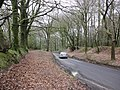 Broad Road descends through the woods, on North Hill - geograph.org.uk - 1774266.jpg