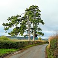 Bromsash Pines 2 - geograph.org.uk - 1634771.jpg
