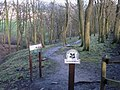 Buckden Wood - geograph.org.uk - 371596.jpg
