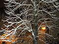 Bucuresti, Romania ( Noapte de iarna in Bucuresti).JPG