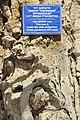 Bujará, Liab-i-Hauz 5.jpg