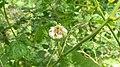Bush flower by sankar.jpg