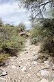 Butcher Jones Trail to Pinter's Point Loop, Tonto National Park, Saguaro Lake, Ft. McDowell, AZ - panoramio (145).jpg
