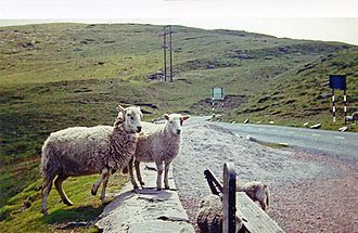 A4061 road - Sheep roaming by the A4061, at Bwlch-y-Clawdd, in 1962