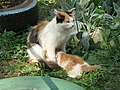C0448-Kstovo-Calico-cat-with-kitten.jpg