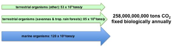 Fijación de carbono - Wikipedia, la enciclopedia libre