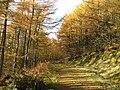 Cademuir Plantation - geograph.org.uk - 1032220.jpg
