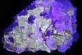 Calcite et fluorine sous UV (USA).JPG