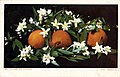 California - Oranges and Blossoms (NBY 431684).jpg