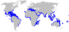 Range of blacktip shark