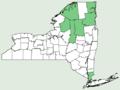 Carex deflexa var deflexa NY-dist-map.png