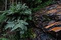 Cascada en el Waraira.jpg