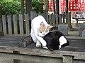Cat (14941657784).jpg