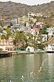 Catalina Island and Ensenada Cruise - panoramio (64).jpg