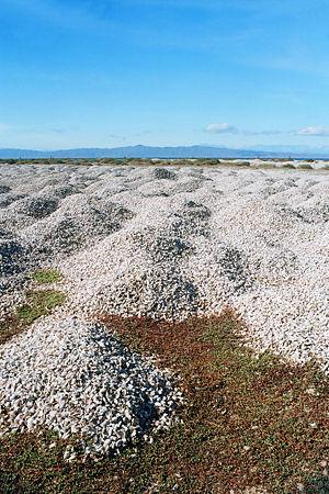 Cementerio de Conchas Marinas en la Isla de Margarita