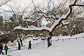 Central Park New York January 2016 007.jpg