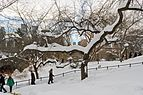 Central Park New York January 2016 007.jpg