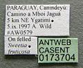 Cephalotes pusillus casent0173704 label 1.jpg