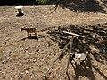 Chèvre Parcelle près Place Champ Foire - Marcigny - 2020-08-15 - 6.jpg